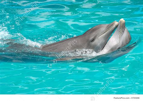 Dolphin Couple In Love Photo